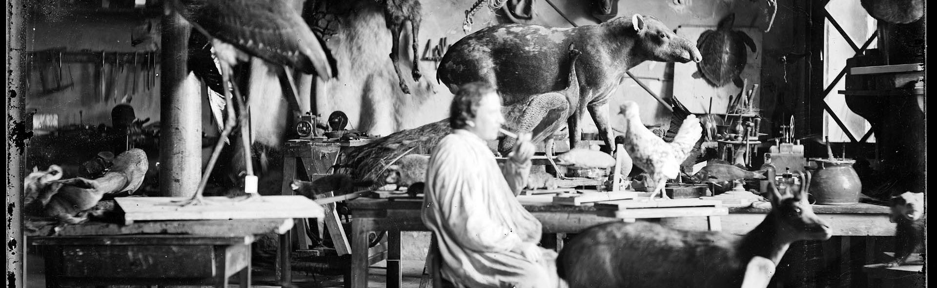 Atelier de taxidermie