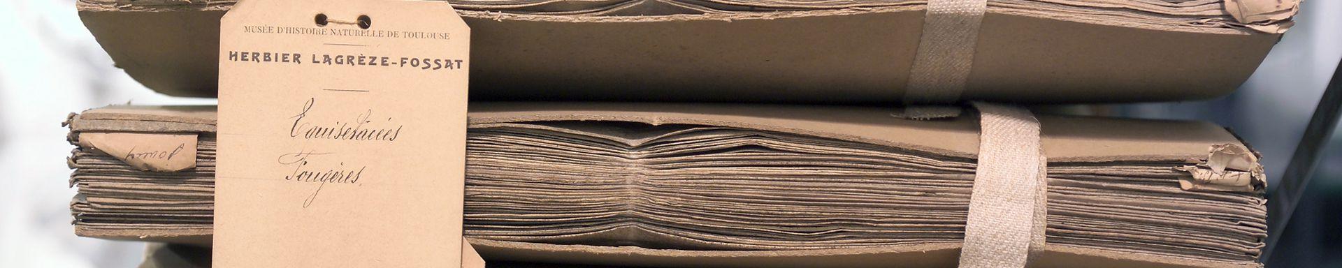 Herbier Lagrèze-Fossat, Muséum de Toulouse