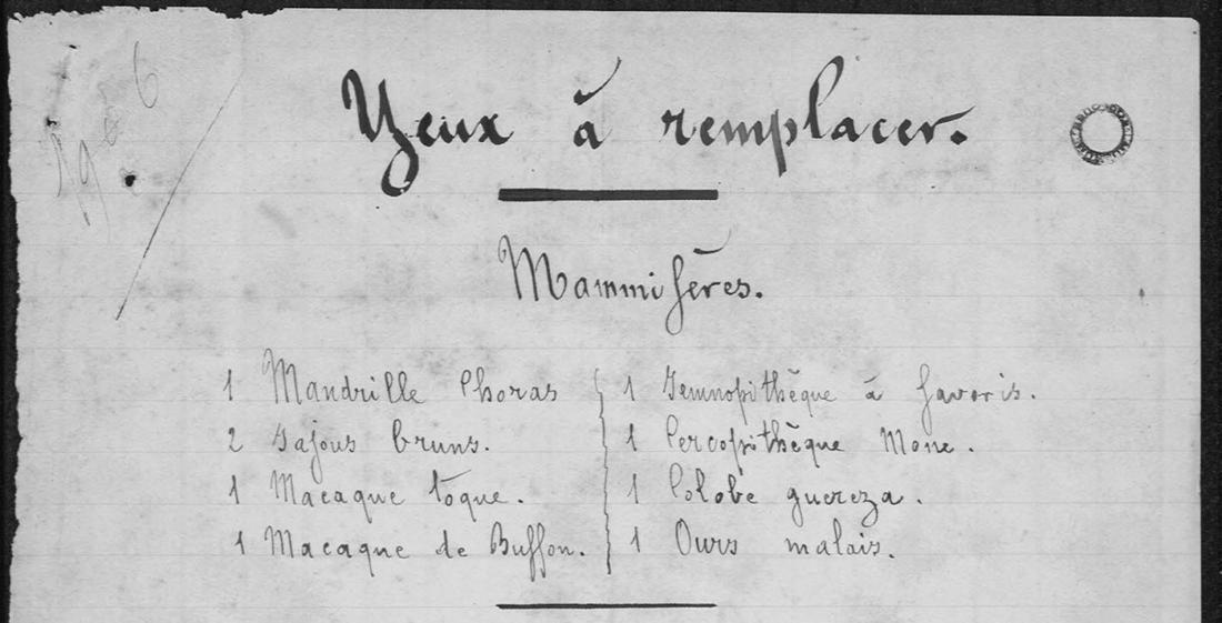 Journal du laboratoire, archives du muséum de Toulouse