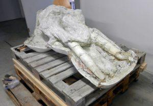 Crâne issu des fouilles du muséum de Toulouse