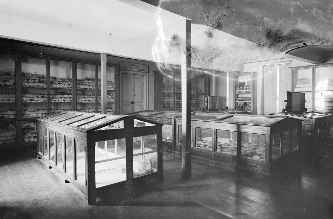 Photographie de la galerie Frizac et Lassus, collections du muséum de Toulouse