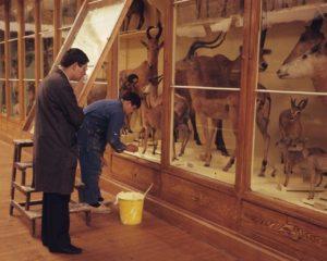 Galerie du muséum de Toulouse