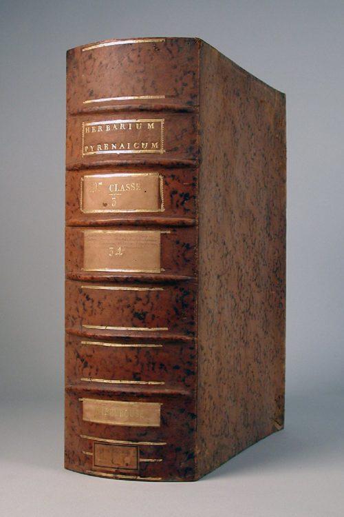 Boîte de l'herbier de Picot, collections du muséum de Toulouse
