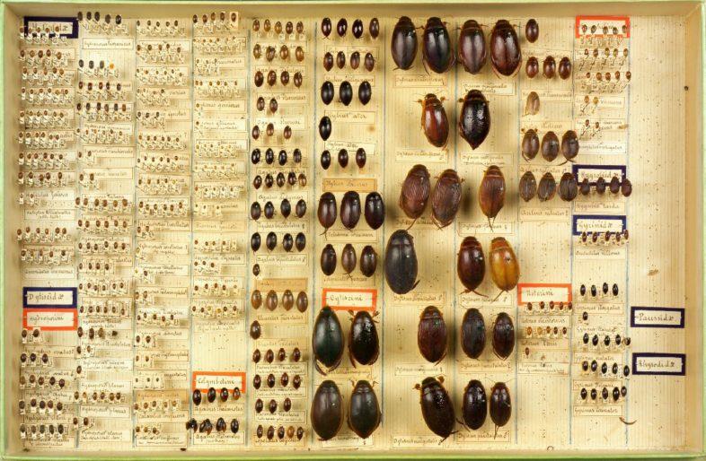 Boite d'arthropodes, collections du muséum de Toulouse