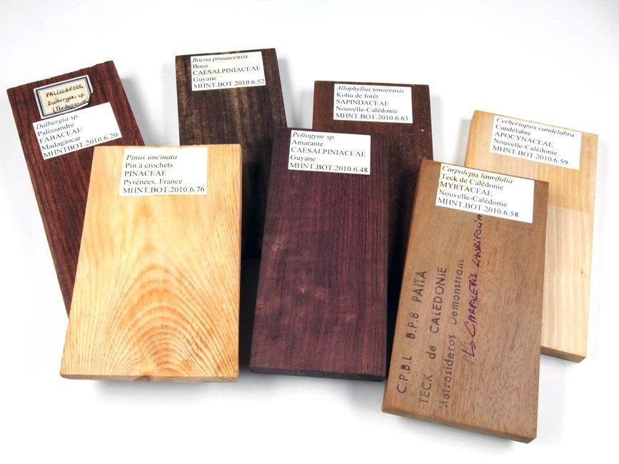 Planchettes de bois, collections du muséum de Toulouse