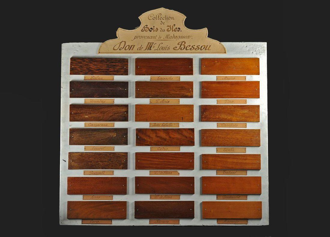 Planche de présentation d'échantillons de bois exotiques, 1920, collections du muséum de Toulouse