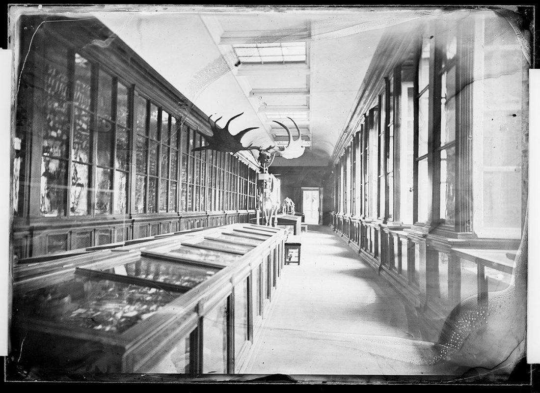 Photographie de la salle de préhistoire par Eugène Trutat, collections du muséum de Toulouse