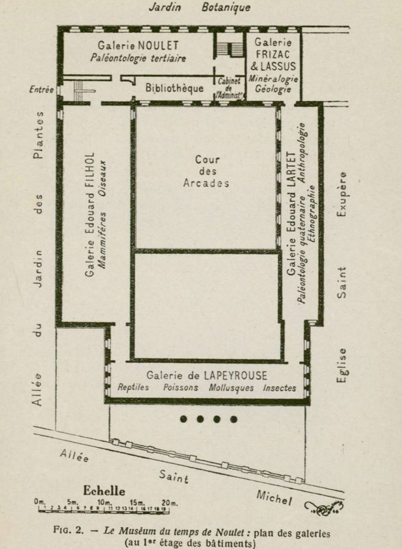 Plan du muséum avec la bibliothèque, collections du muséum