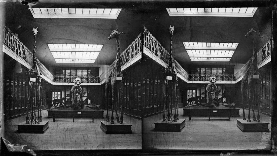 La salle Édouard Filhol en 1871, photo. collections du muséum de Toulouse