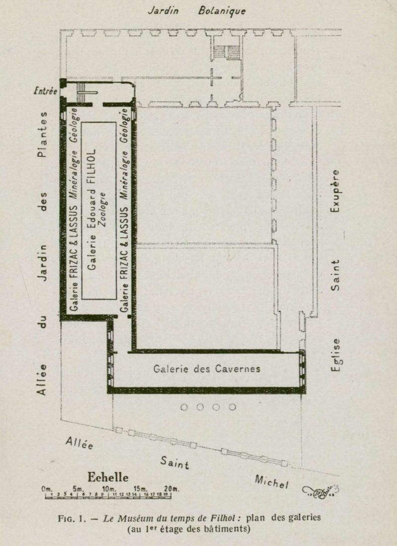 Plan du muséum de Toulouse