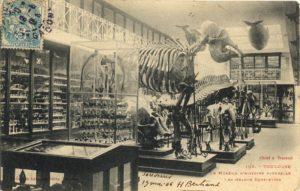 Le muséum circa 1900, Archives Municipales de Toulouse