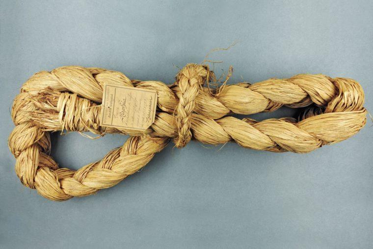 Échantillon de raphia en tant que produit d'exportation, collections du muséum de Toulouse