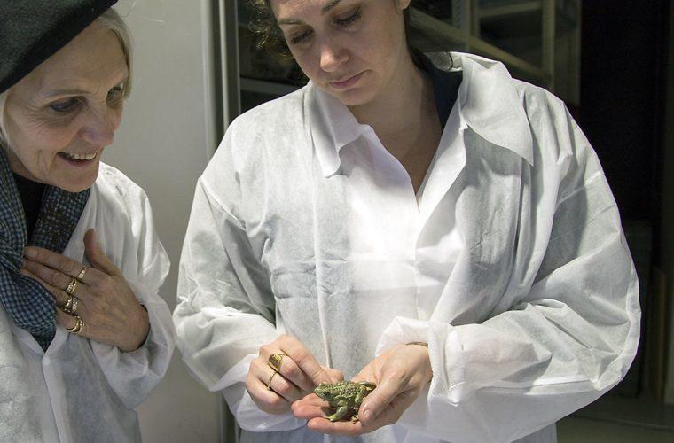 Moulage de grenouille, muséum de Toulouse