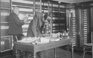 Photographie de Bégouën et fils, collections du muséum