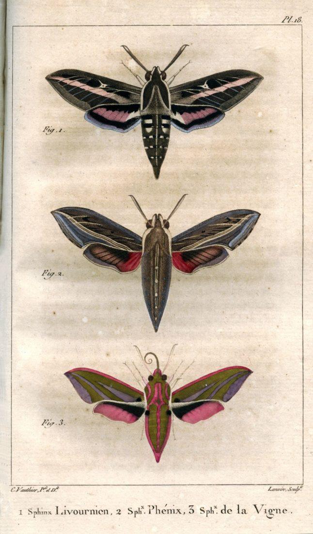 Histoire naturelle des lépidoptères ou papillons de France, J.-B. Godart et P.-A J. Duponchel, collections du muséum de Toulouse