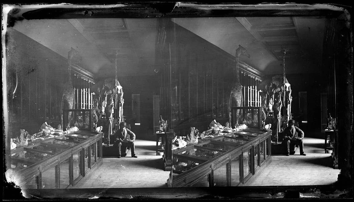 Pplaque négative stéréoscopique au collodion, format 9x16, collections du muséum de Toulouse