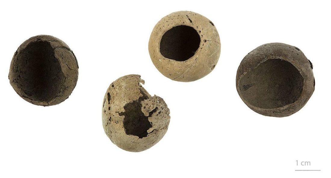 Paschalococos disperta, collections du muséum de Toulouse