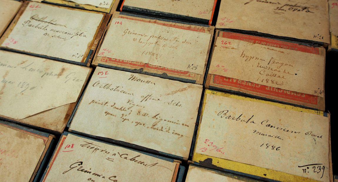 Boîtes de mousses de l'Abbé Boulay, collections du muséum de Toulouse