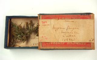Boîte et mousse de l'Abbé Boulay, collections du muséum de Toulouse