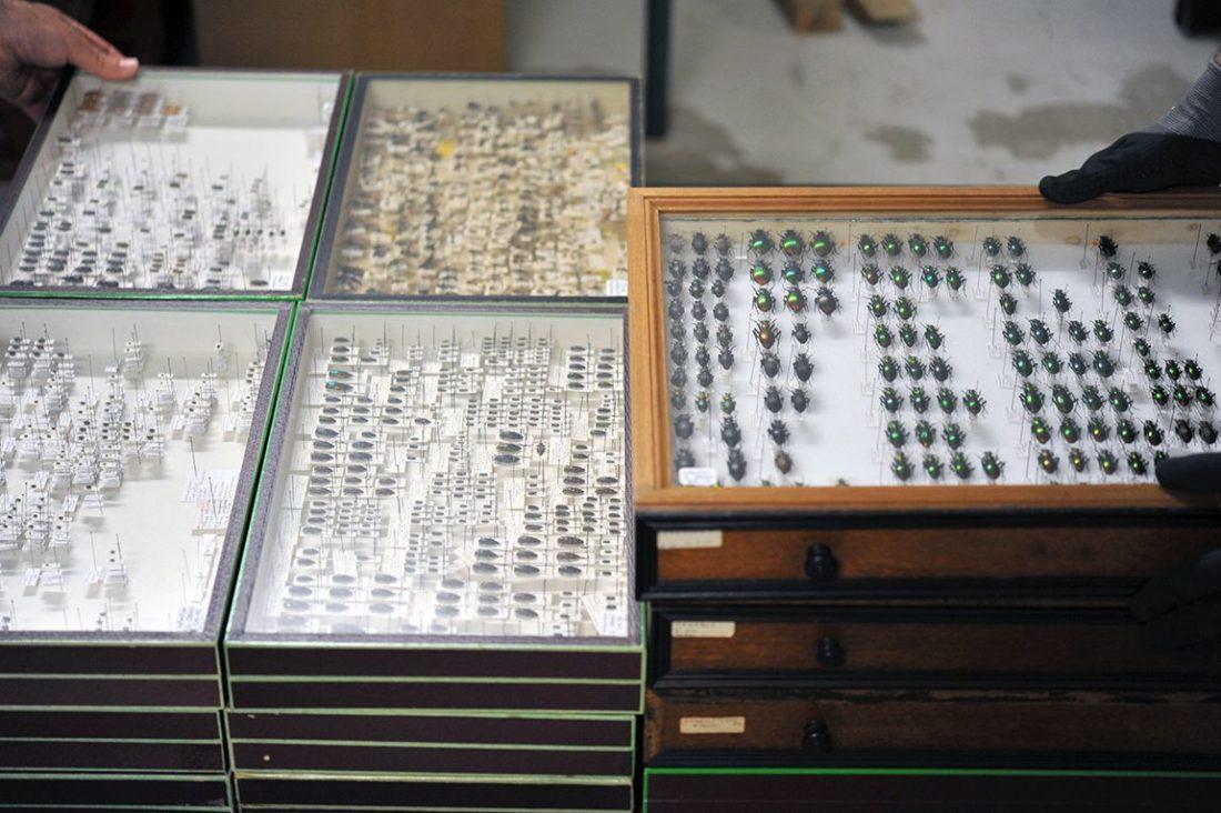 Collection Canou, collections du muséum de Toulouse