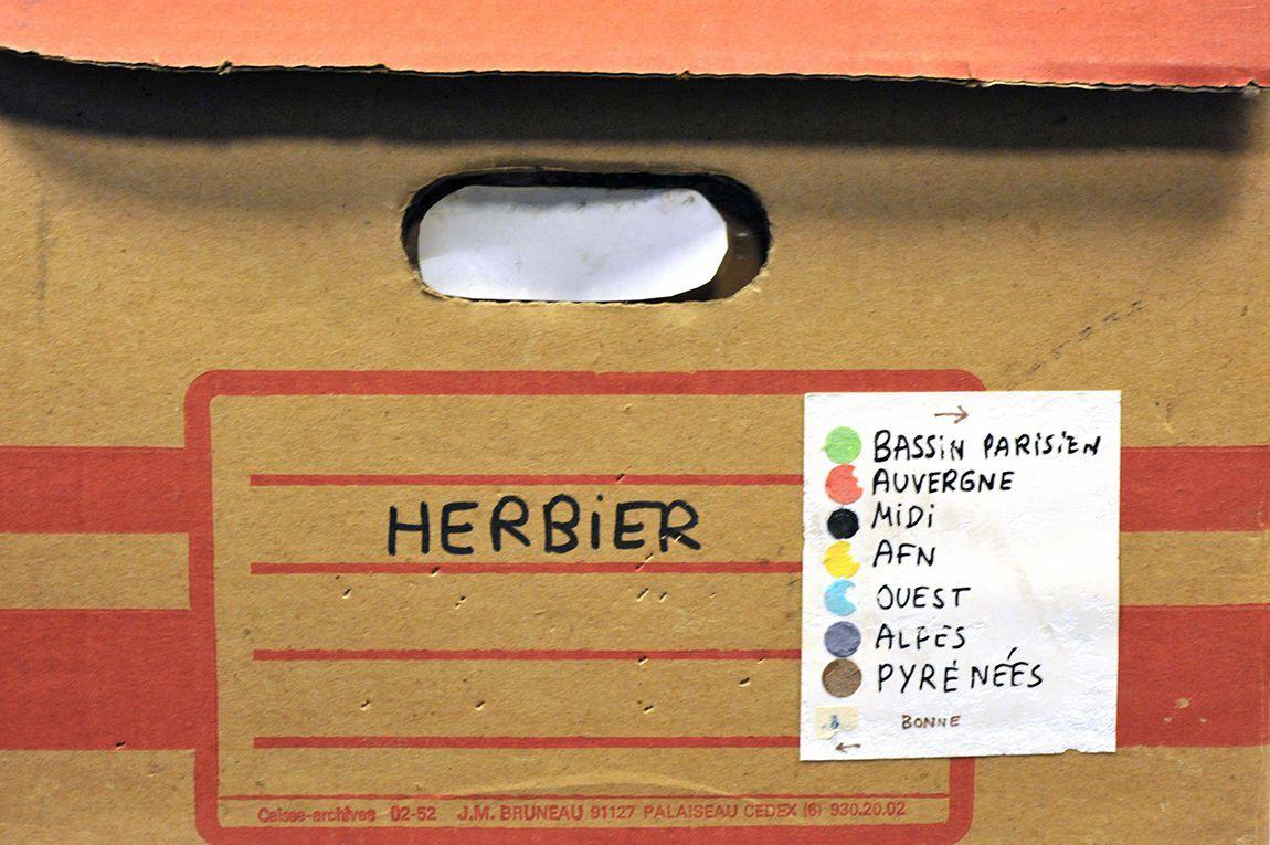 Herbier Michel Emerit, collections du muséum de Toulouse