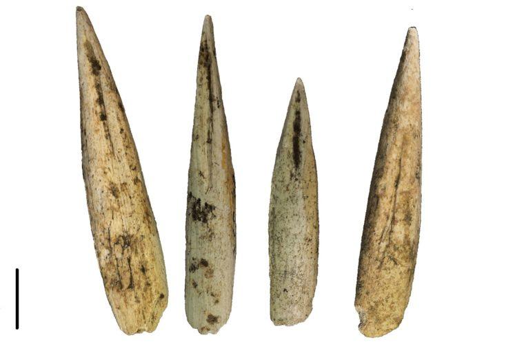 Sagaies type Lussace-Angles, collections du muséum de Toulouse