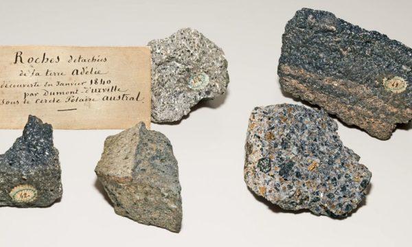 Roches de terre Adélie, collections du muséum de Toulouse